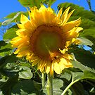 Sun Flower. by Lee d'Entremont