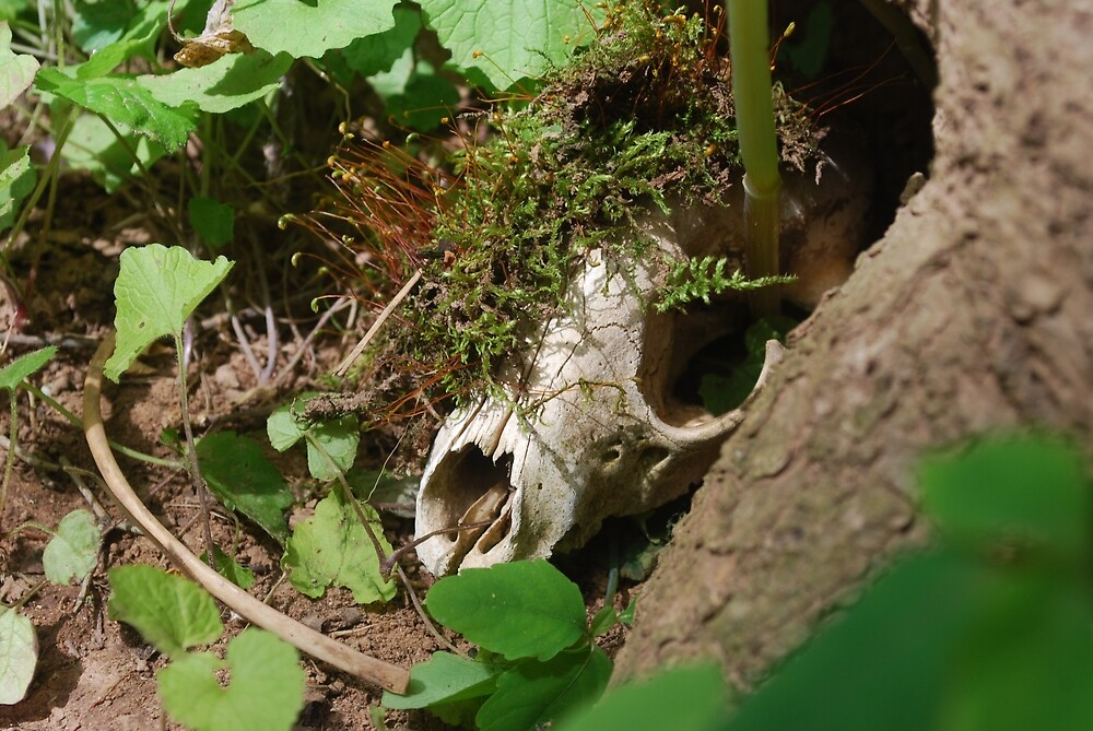 Raccoon Skull by TheDragonLady23