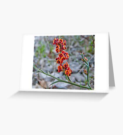 Flowering Scrub Greeting Card