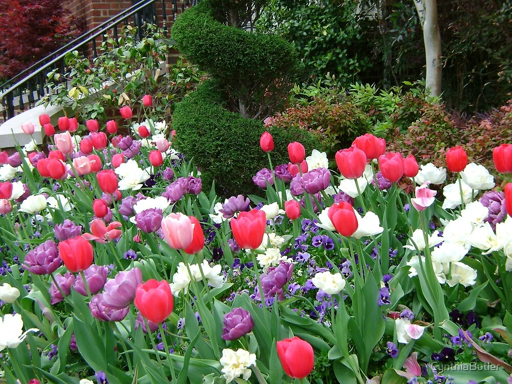Tulip Garden by CynthiaButler
