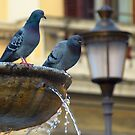 Pidgeons in Rome by Beth A