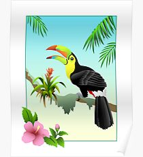 Keel Billed Toucan Poster