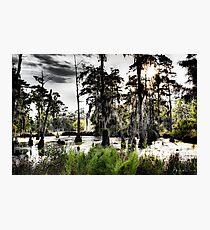 Sam Houston Swamp-2 Photographic Print