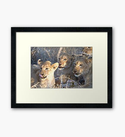 Tongues Out Framed Print