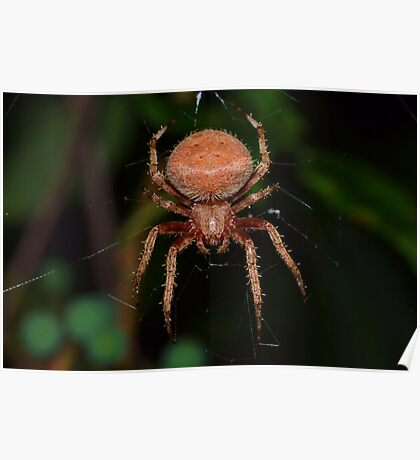 Red Orb Weaver Poster