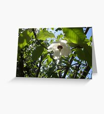 Hidcot Gardens, National Trust Property Greeting Card