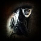 Colobus monkey ~ by Edge-of-dreams