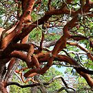 Arbutus in a tangle  by TerrillWelch
