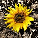 Sunny with a chance of Black and White by Andre Faubert