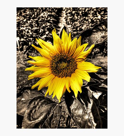 Sunny with a chance of Black and White Photographic Print