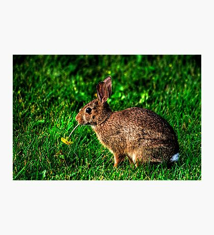 Meal Time Photographic Print