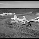 Beachscape and driftwood in monochrome by jrier