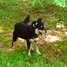 Rosie, My Adopted New Puppy by Vivian Eagleson