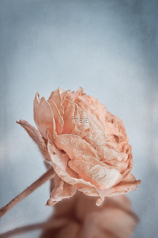 Dried Flower by VIA INA