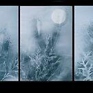 Moon Prairie Trypdick by evon ski