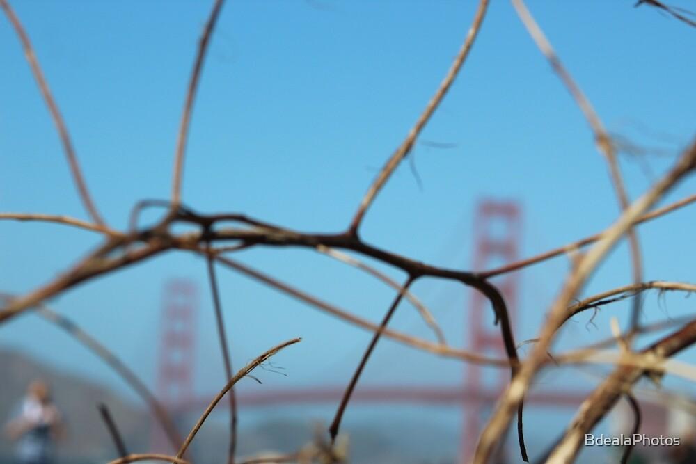 Golden Gate Bridge by BdealaPhotos