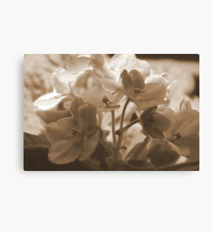 Violets in Sepia Canvas Print