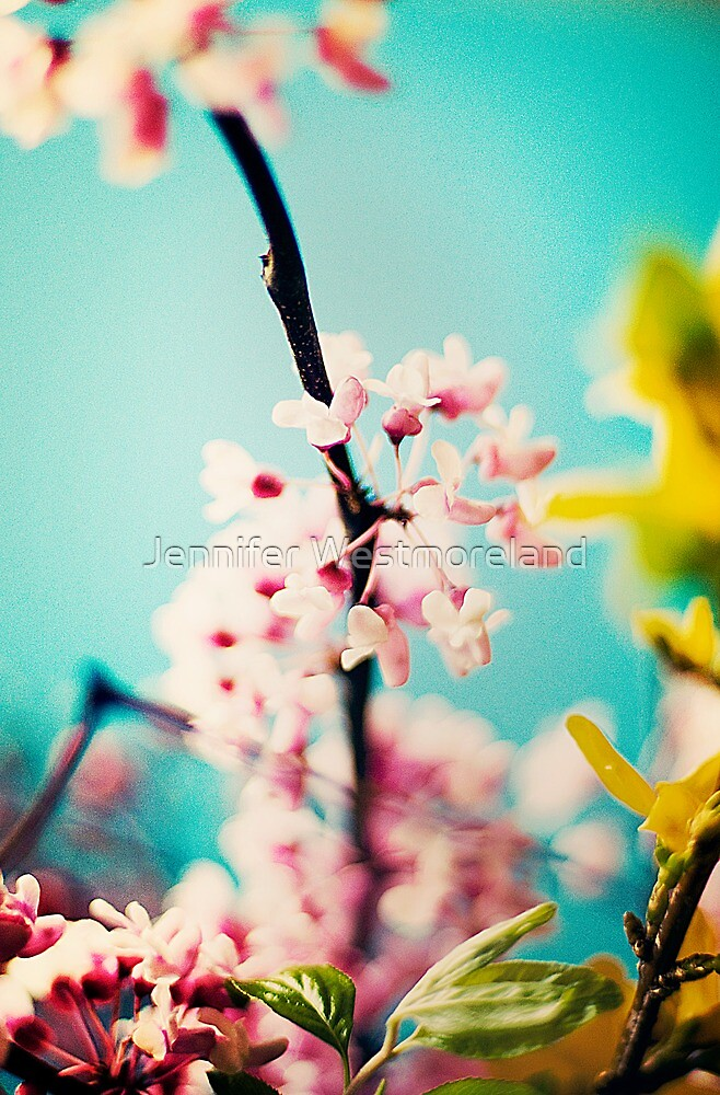 Early spring branch flowers on turquoise background by Jennifer Westmoreland