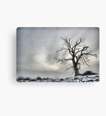Winter Tree Landscape Canvas Print