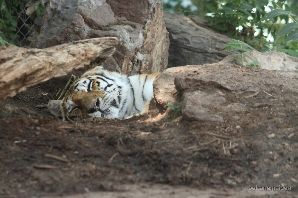 Sleeping Tiger, Hidden Claws by beltanemaiden
