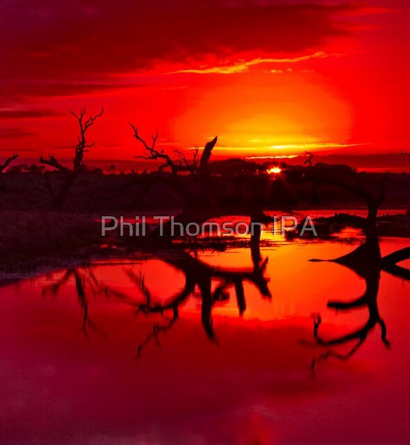 """Tranquility Ablaze"" by Phil Thomson IPA"