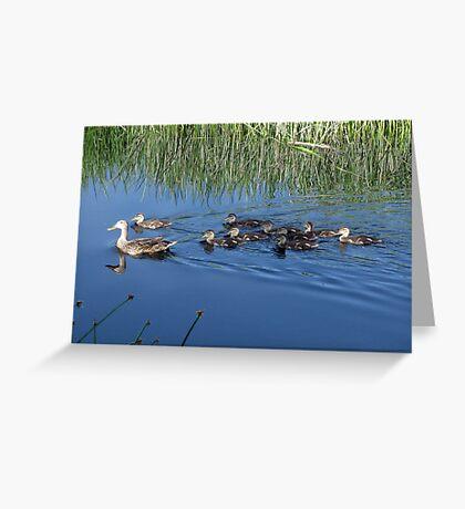 Mallard Hen with Ducklings Greeting Card