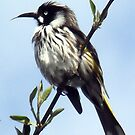 Little Honey Eater. by JazzieLouise