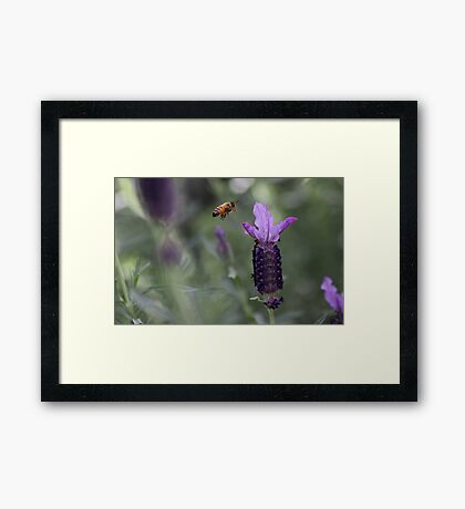 Almost there . .  Framed Print