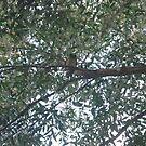 Southern Boobook owl at Binginwarri, Gippsland by gen1977