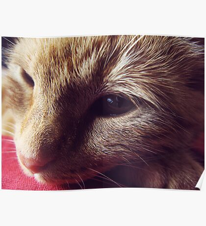 Dharma the cat Poster