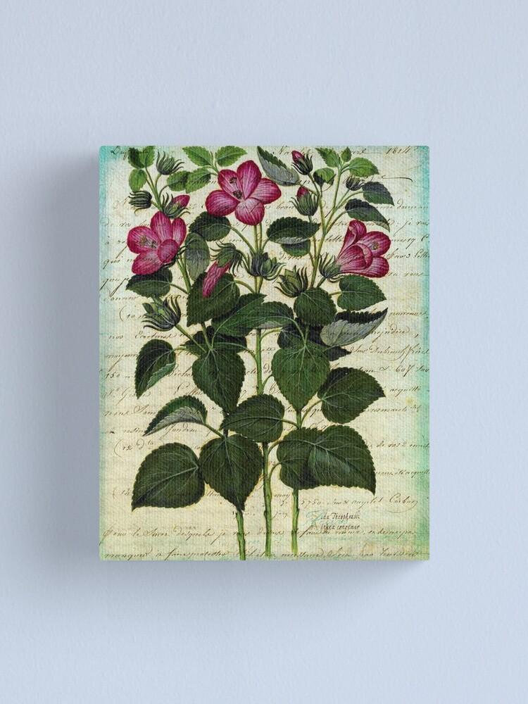 Alternate view of Italian Hibiscus Vintage Botanical  Canvas Print