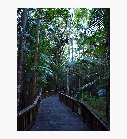 Buderim Forest Park Boardwalk Photographic Print