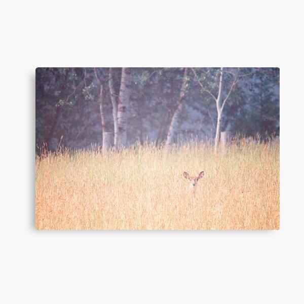 Good Morning Little Deer Canvas Print