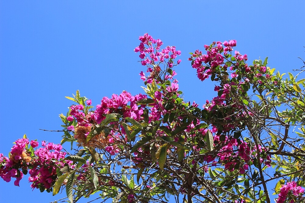 Blooming Branches on a Tree by rhamm