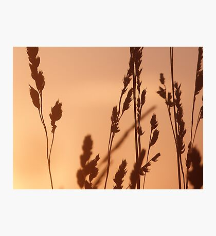 Evening Gold Photographic Print
