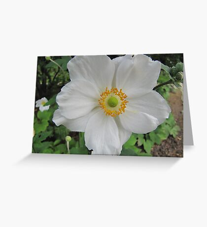Anemone in white Greeting Card