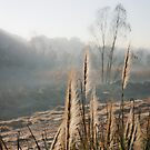 The Reeds Family  by David  Preston
