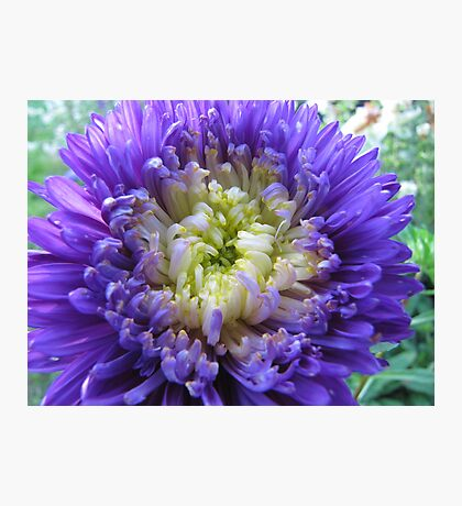 Blue dahlia Photographic Print