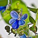 Butterfly Flower by Denise Abé
