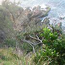 Broken Head - Byron Bay by Louise Linossi Telfer