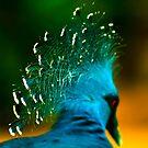 Victoria Crowned Pigeon by Didi Bingham