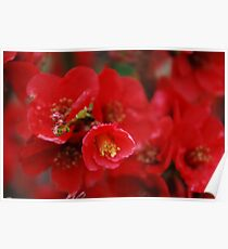 Dads Japonica Poster