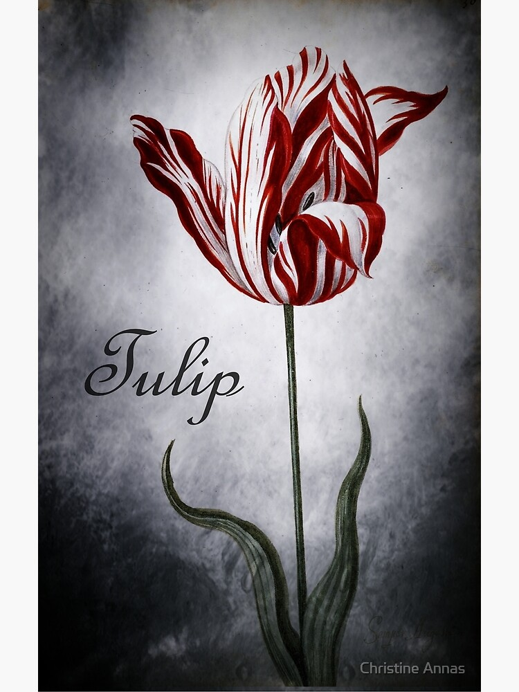 Vintage Tulip by 2Bricks