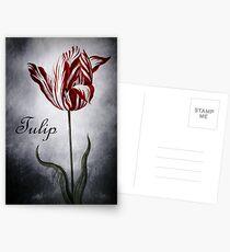 Vintage Tulip Postcards