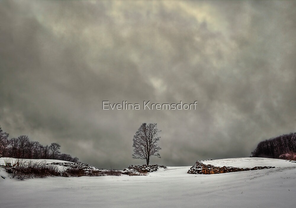 Winter Blues by Evelina Kremsdorf