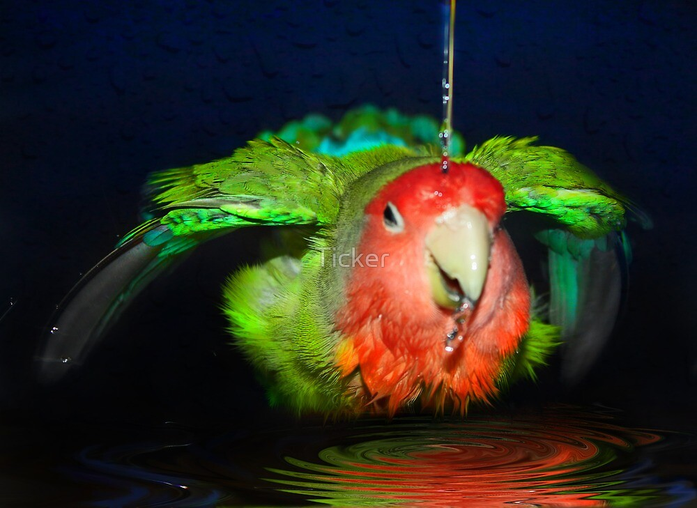 sPliSh-sPlasH I am HaVIng a bATh ! by Ticker