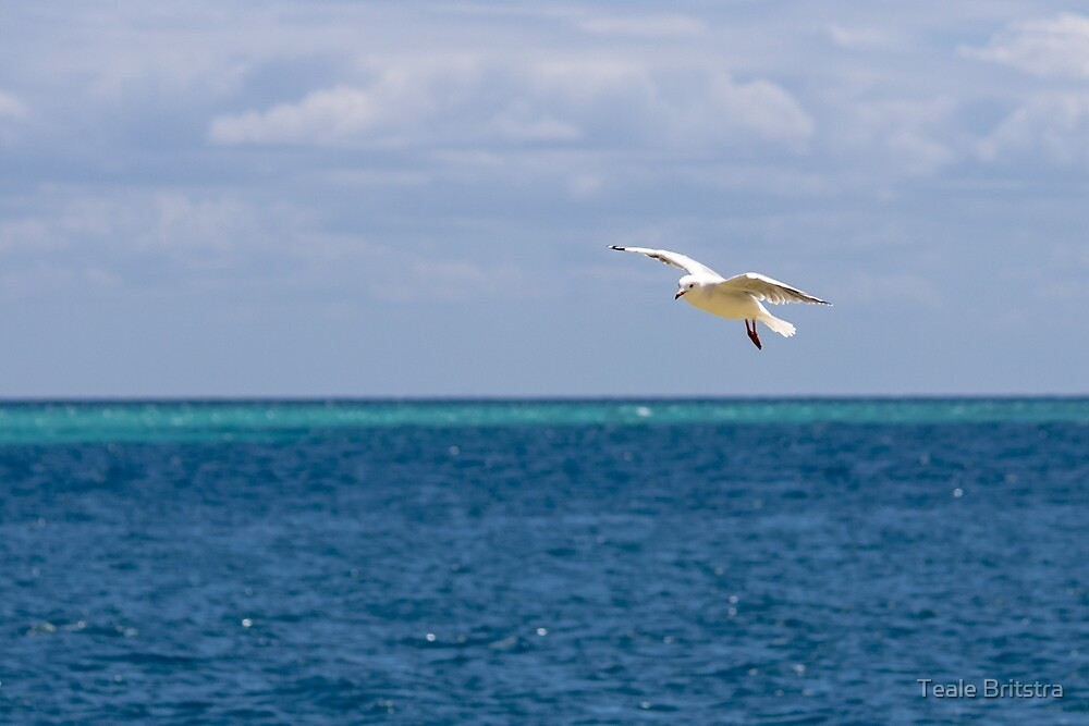 Silver Gull over Water by Teale Britstra