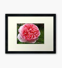 Rose florets Framed Print