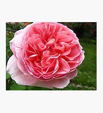 Rose florets Photographic Print