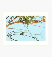 a beautiful kingfisher in windjana gorge Art Print